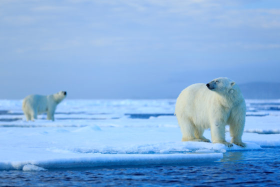 NOAA Issues Guidelines for Arctic Marine Mammal Disasters